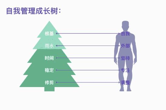 自我管理成长树